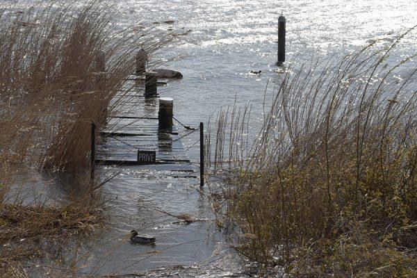 verdronken landschap2